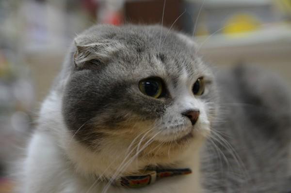 005 キティ