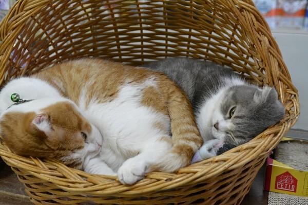 ダニエル&キティ