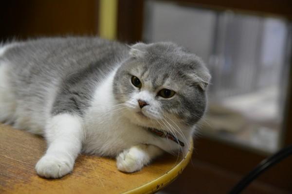 キティ001