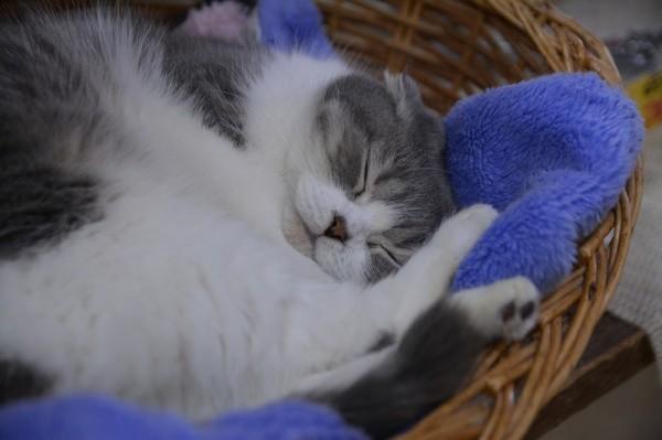 kitty022