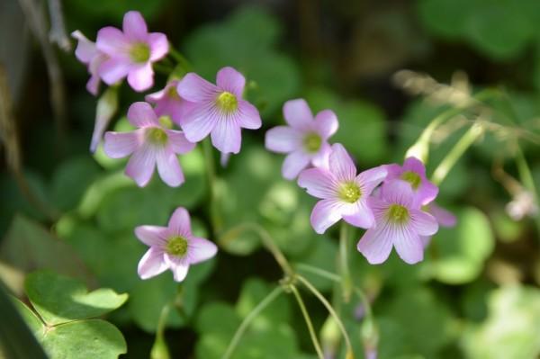 flower 013