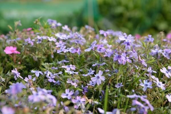 Flower_0023
