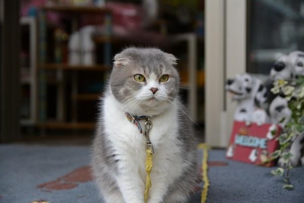 Kitty_0034