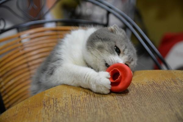 Kitty_0041