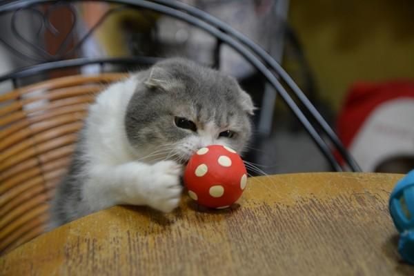 Kitty_0045