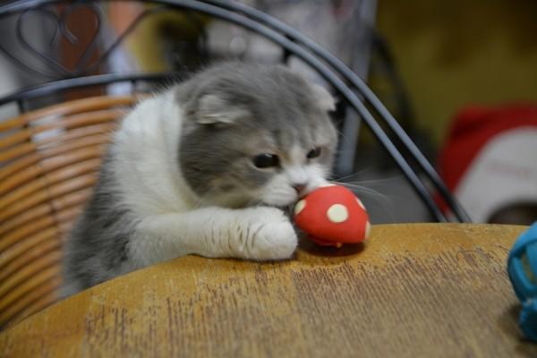 Kitty_0046