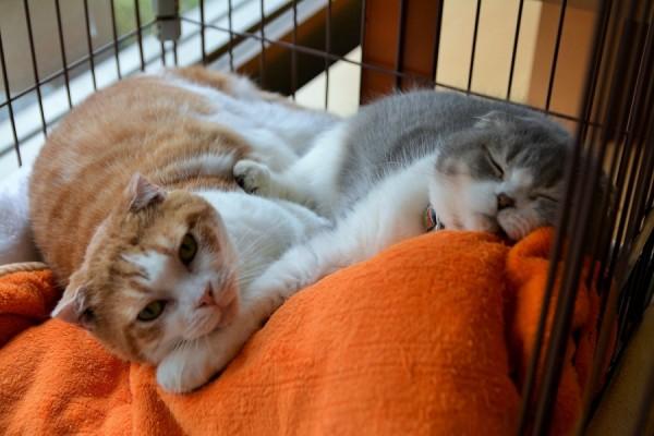 Daniel&Kitty