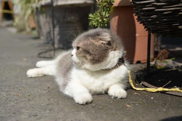 Kitty_0595