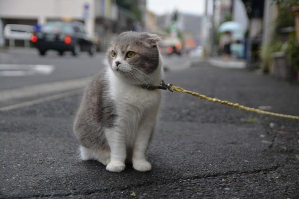 Kitty_1030
