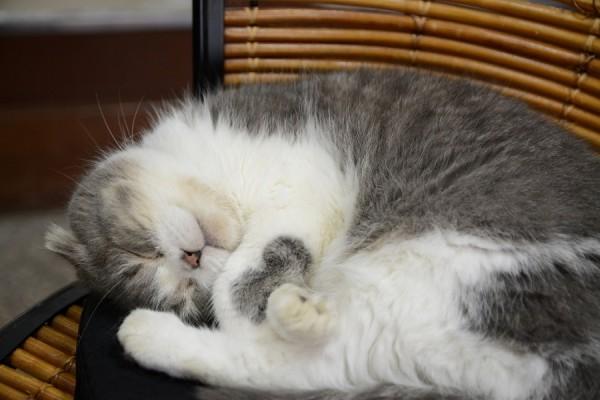 Kitty_0376