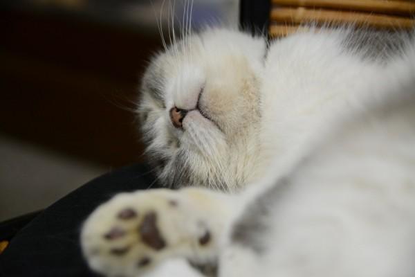 Kitty_0426