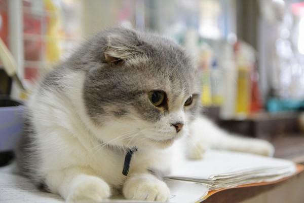 Kitty_0354