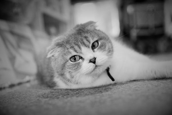 Kitty_0365 (2)