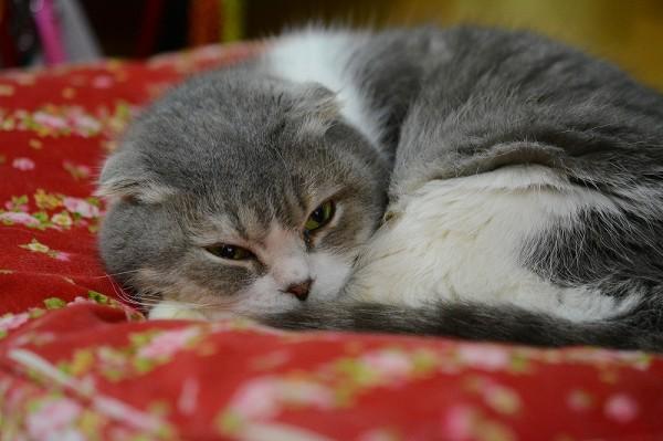 Kitty_0243