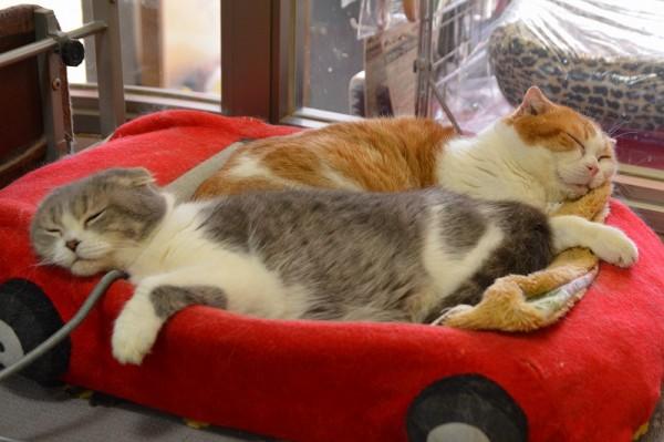 Kitty&Daniel_0166
