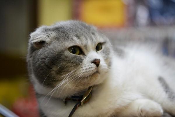 Kitty_0047