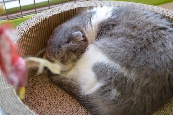 Kitty_0662