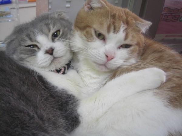 キティ&ダニエル